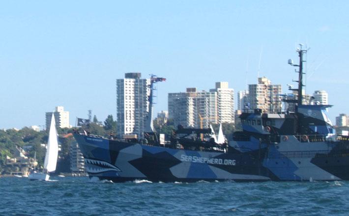 Sea Shepherd leaves Sydney Harbour