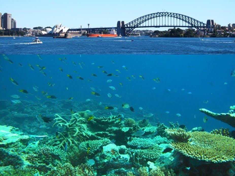 Sydney boat cruise